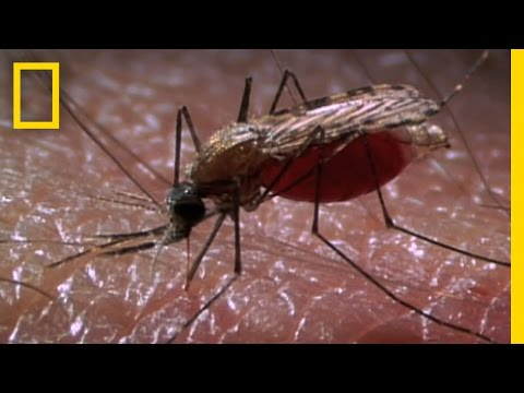 New Laser Zaps Mosquitoes in SlowMotion | National Geographic