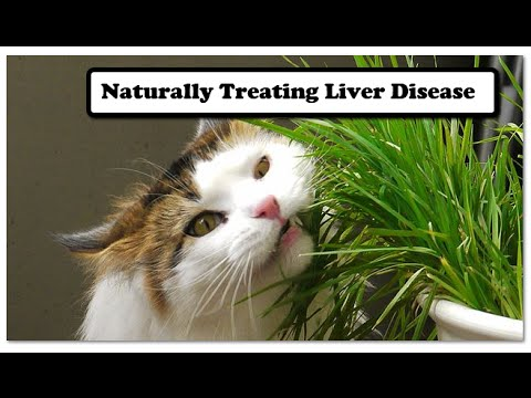 Naturally Treating Liver Disease in Dogs and Cats