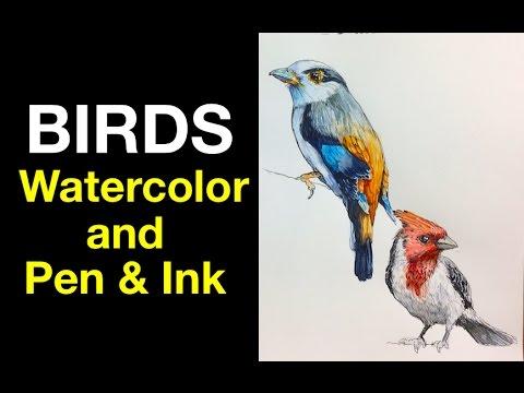 Watercolor | Pen & Ink Study e3 | Birds