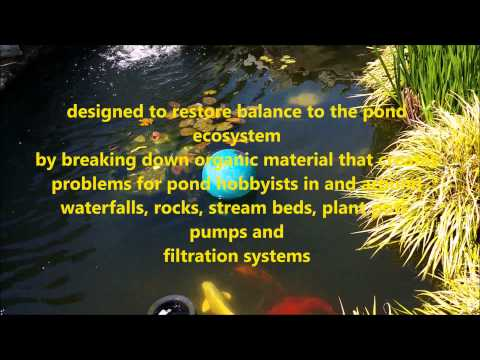 Koi Pond water quality