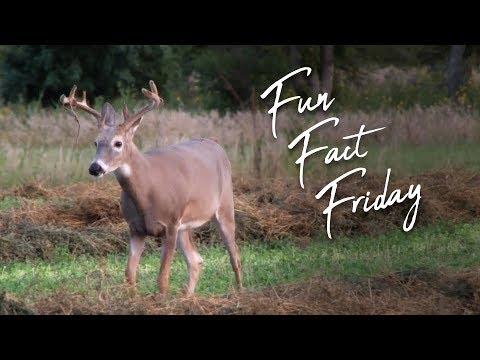 Fun Fact Friday: Brandon Jennings Turns His Luck Around!