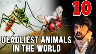 10 Deadliest Animals in the World | Simbly Chumma