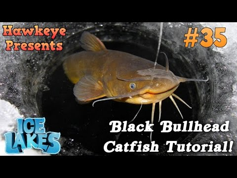 Ice Lakes - Ep. #35 - Black Bullhead Catfish Tutorial!