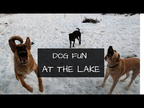 Dogs Having Fun at the Lake Cabin Vlog | Is it Spring Yet?