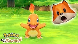 Charmander   Beating Brock!! | Pokémon Let