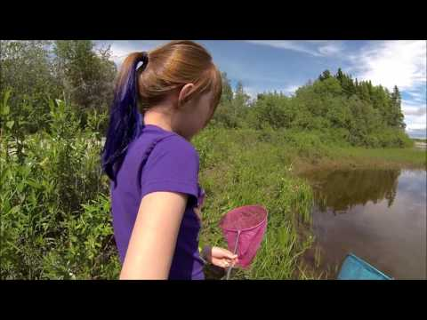 Northern Leopard Frogs - Frog Catching With Anna
