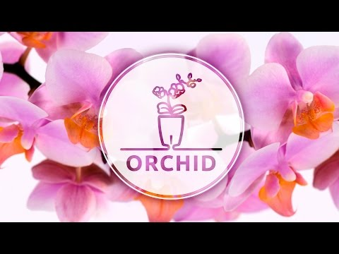 How To Plant Orchid (Phalaenopsis) in a self-watering Orchidea TWIN pot with water level control