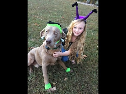 Halloween costume haul for my pets. Princess Ella hosts a costume show with all her pets