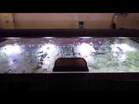 DIY Sliding Glass Aquarium tops