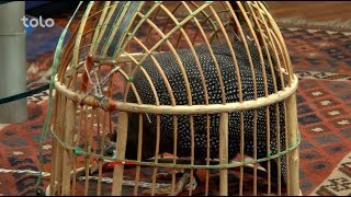 Download بامداد خوش - کاه فروشی - صحبت های حاجی اکبر زرگر در مورد پرنده تیکر Video