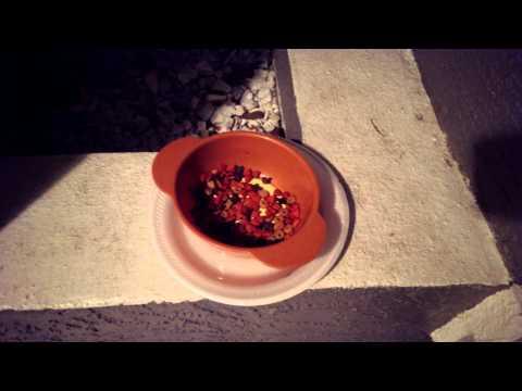 How To Prank Ants!