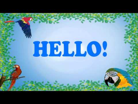 Teach your Parrot to say Hello! (No Background Noise)