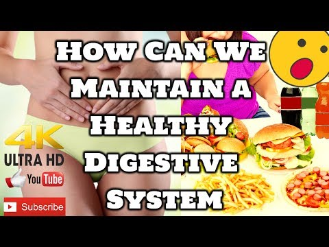 How Can We Improve and Maintain a Healthy Digestive System | 10 Best Digestive Health | Tech Niloy