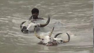 rekla race செக்குக்குடி கிராமத்தில் பொங்கல் பண்டிகையை முன்னிட்டு மாட்டு பொங்கலான்று