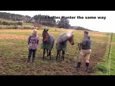 Catching horses with rope halter