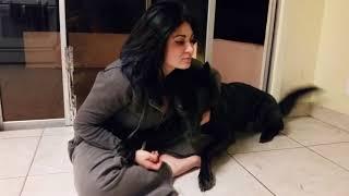 Silly Wolfdog Sounds