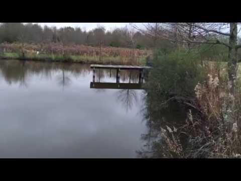 How to protect your trees from beavers in your pond.