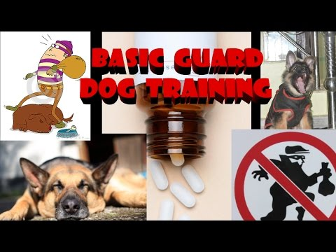 how to train your dog to basic guard in hindi : dog training in hindi