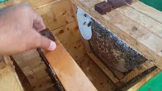 #x202b;الخلية الكينية بين طرود النحل المرزوم والطرد العادي#x202c;lrm;