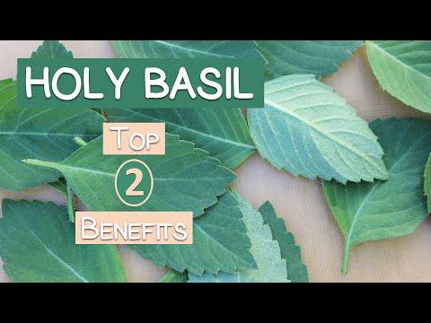 Top 2 Benefits of Holy Basil, A Sattvic Herbal Rasayana