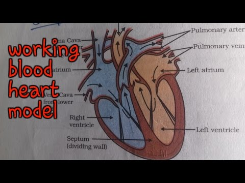 ✔working human heart   science model    10th class working heart model   science project   bio model