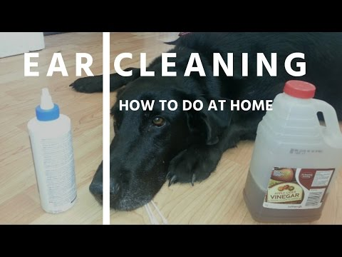 Ear Cleaning For Dogs and Cats