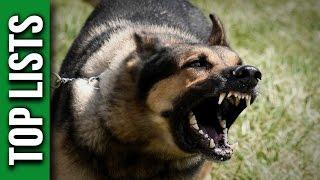 5 Most Dangerous Dog Breeds