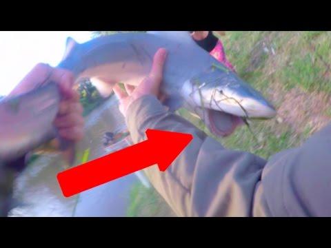 Shark Fishing Logan River - Near SHARK BITE! HD
