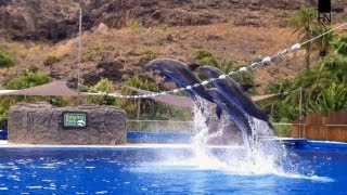 Dolphin Show - Five Dolphins perform High jumps, Great speed and underwater tricks