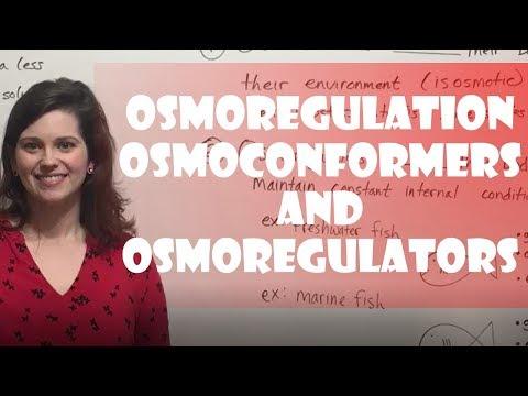 Osmoregulation: Osmoconformers & Osmoregulators