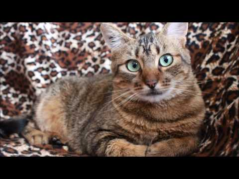 Stop Cat Peeing On Couch, Rug or Carpet Right Now!