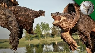 Download Alligator Snapping Turtle vs Common Snapping Turtle Video