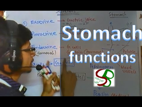 Stomach function