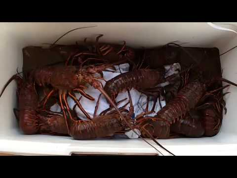 HOW TO CLEAN AND COOK CALIFORNIA SPINY LOBSTER
