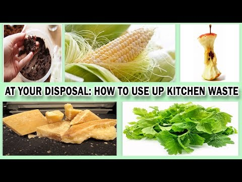 At Your Disposal: How to Use Up Kitchen Waste