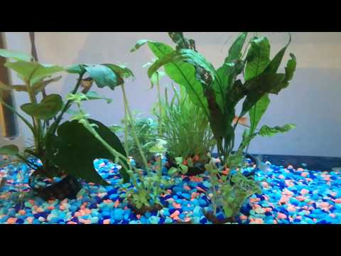 Tiny Ramshorn Snails eating my plants - snail infestation