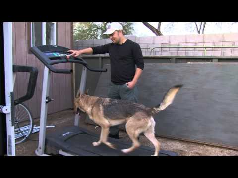 Abel Bailey - Service Dog Training - Update #2