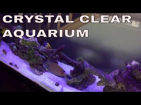 crystal clear saltwater aquarium: filmed with iphone6