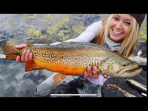 The Biggest Tiger Trout On The Fly ... EVER!