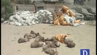 Donkey Skin Leather Recover in Mass Quantity From Maripur