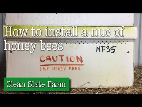 How to install a nuc of honey bees