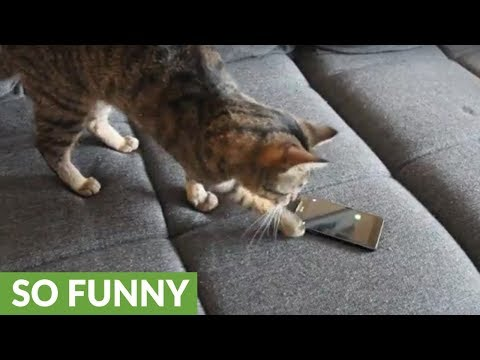 Frustrated cat gets fed up with smartphone game