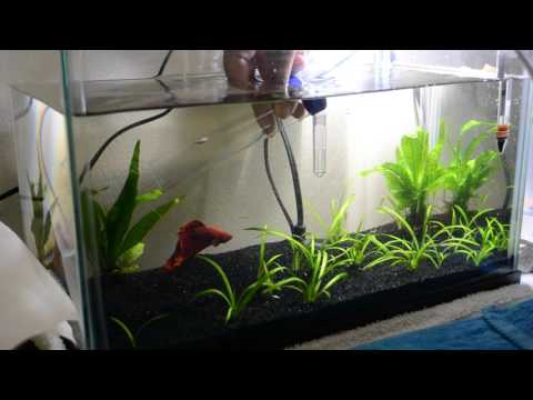 5 Gallon Planted Betta Tank: Water Changes