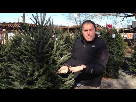 How to pick a fresh cut Christmas tree in Nashville,TN at JVI Secret Gardens
