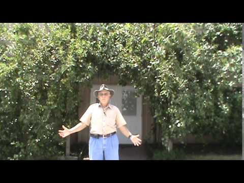 Dr. Powell discusses Hard Pears
