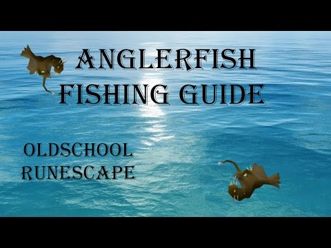 OldSchoolRunescape: How to catch anglerfish? Anglerfish fishing guide (zeah, piscalirious house)