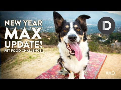 New Year Max The Dog Update! #ad