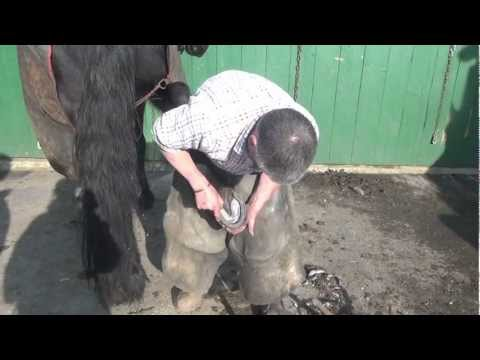 Xxx Mp4 Shoeing The Driving Horse Our Farrier At Work 3gp Sex