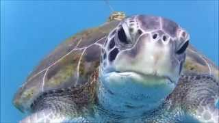 Tenerife:  How, Where and When to Swim with the Turtles! Wild Swimming