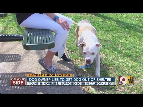 Dog owner lies to get dog out of shelter
